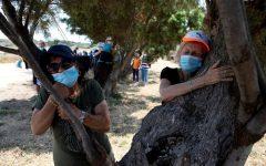 Abrazar árboles como terapia en tiempos de Covid-19