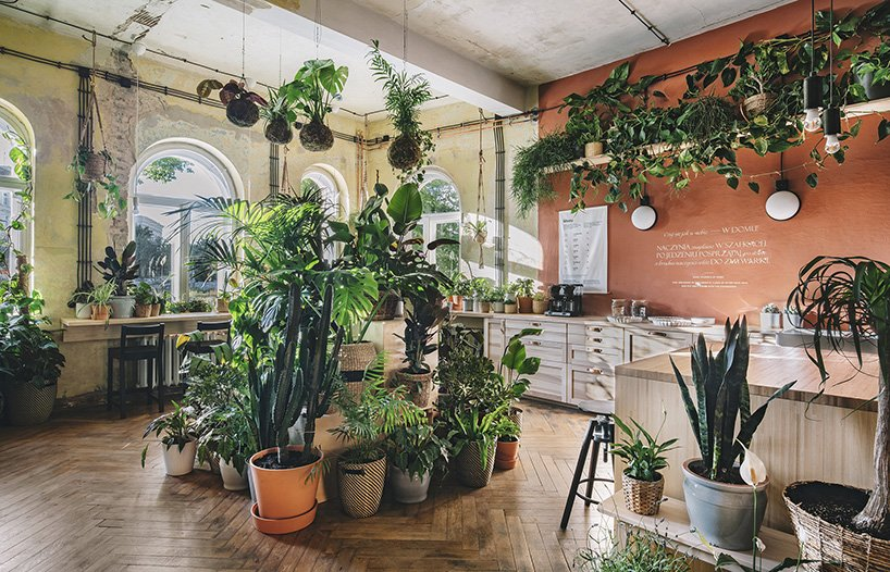 ikea hogar del mañana plantas interior loqueva (1)