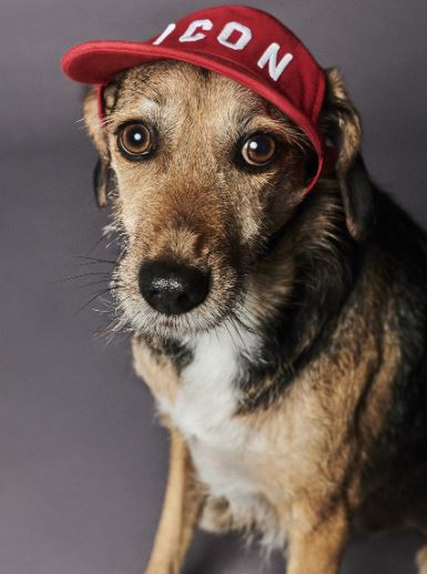 Dsquared2 junto a Poldo Dog Couture presentan una colección de ropa para perros (10)