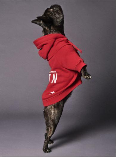 Dsquared2 junto a Poldo Dog Couture presentan una colección de ropa para perros (2)
