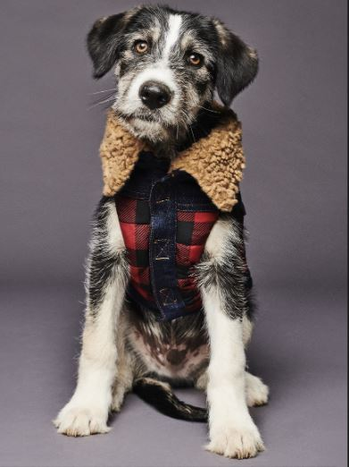 Dsquared2 junto a Poldo Dog Couture presentan una colección de ropa para perros (4)