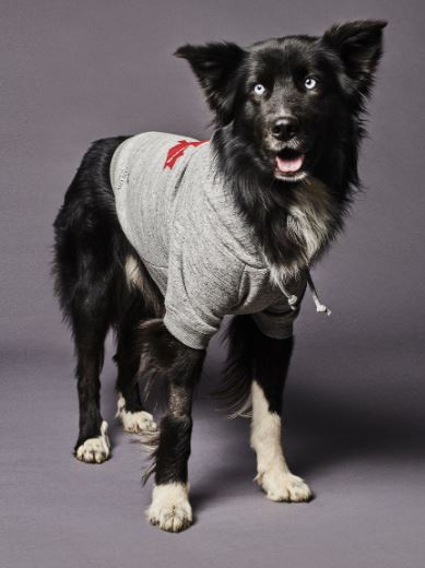 Dsquared2 junto a Poldo Dog Couture presentan una colección de ropa para perros (5)