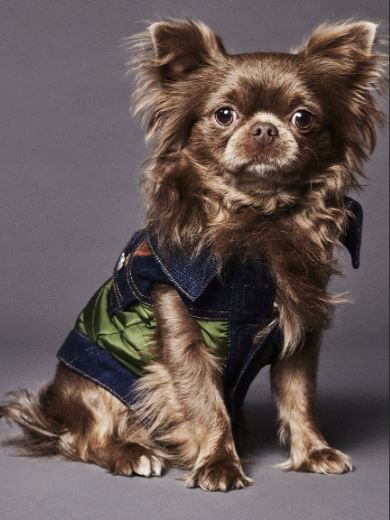 Dsquared2 junto a Poldo Dog Couture presentan una colección de ropa para perros (8)