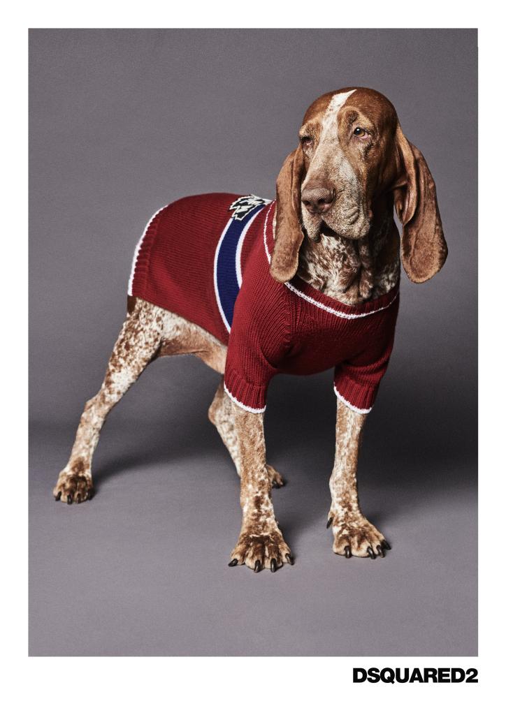 Dsquared2 junto a Poldo Dog Couture presentan una colección de ropa para perros (9)