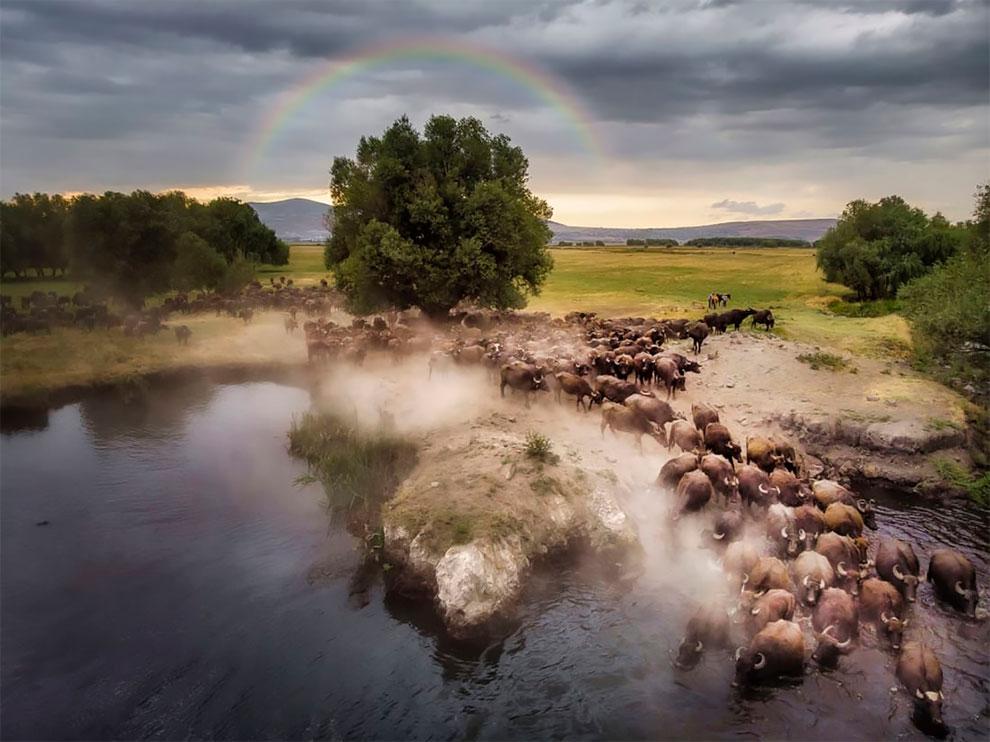 Mehmet Aslan Drone Photo Awards